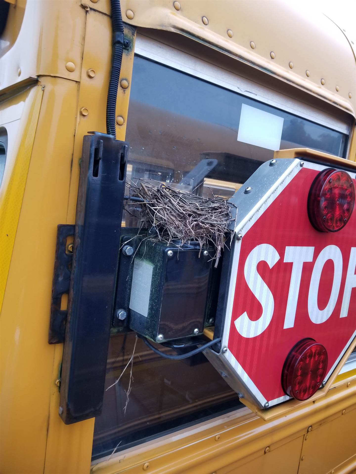 Robin's nest built on the bus stop sign.