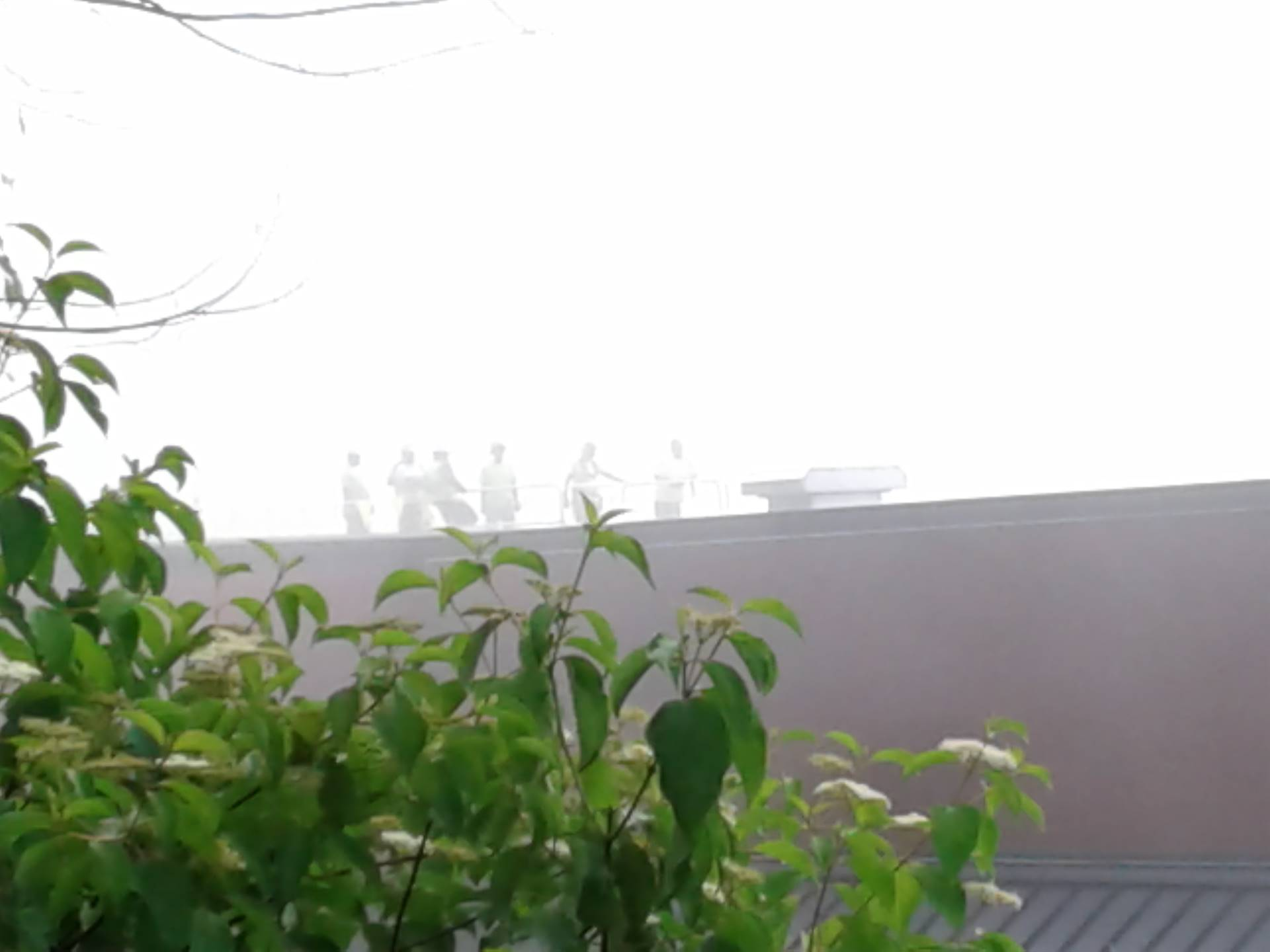 Foggy morning on the roof!