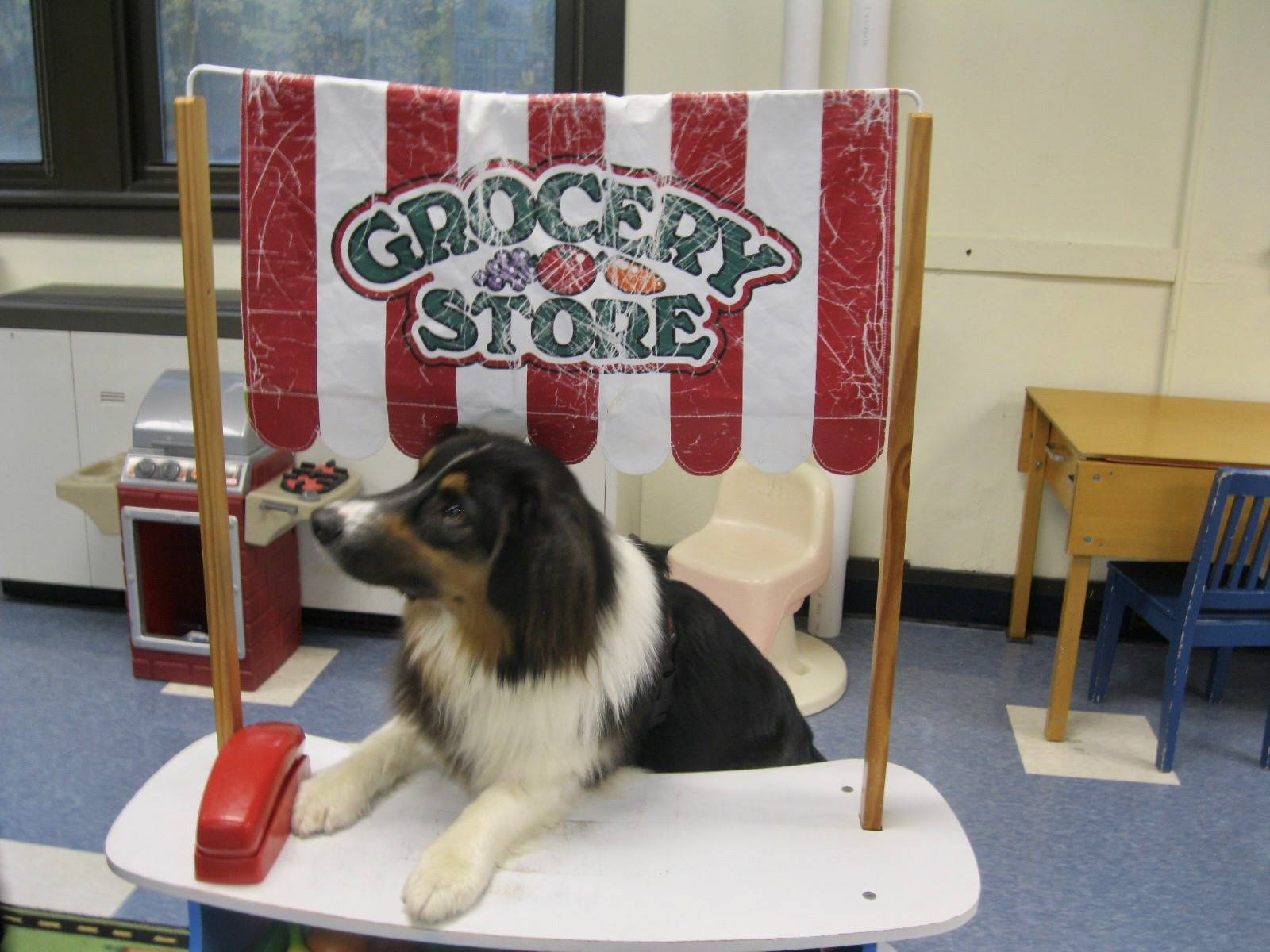 Reading therapy dog