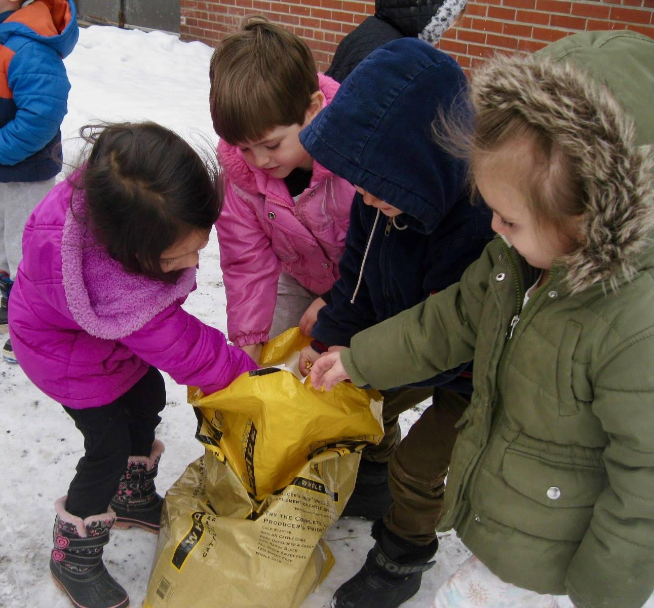 4 students dipping into the bird food.